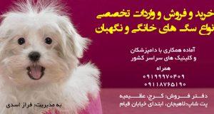 خرید و فروش و واردات تخصصی انواع سگ های خانگی و نگهبان در کرج