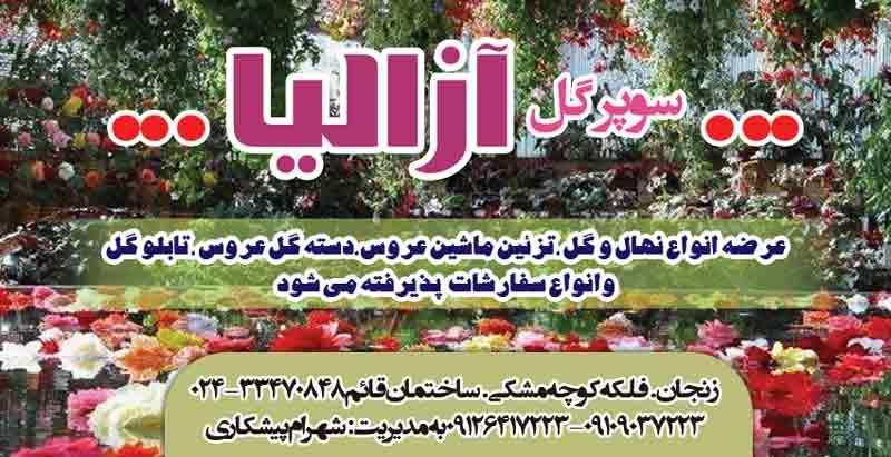 سوپر گل آزالیا در زنجان