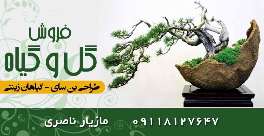 فروش گل و گیاه ناصری