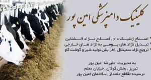 کلینیک دامپزشکی امین پور در تبریز