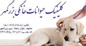 کلینیک حیوانات خانگی بزرگمهر در مشهد