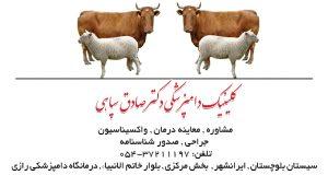 کلینیک دامپزشکی دکتر صادق سپاهی در ایرانشهر