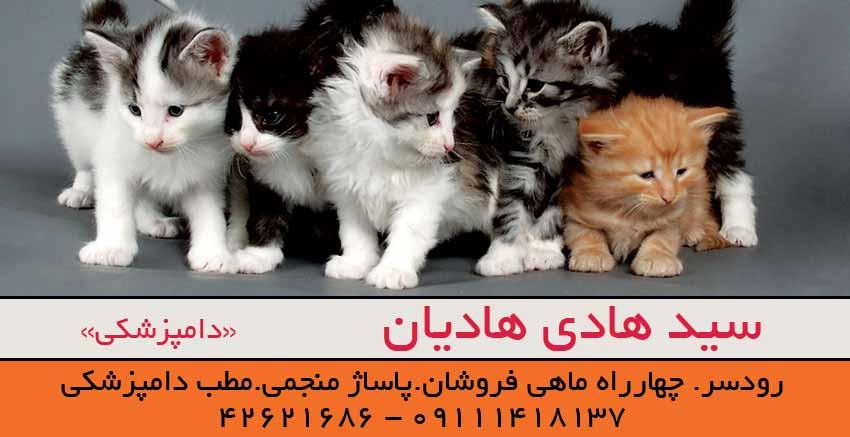 دامپزشک سید هادی هادیان در رودسر