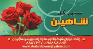 سوپر گل شاهین