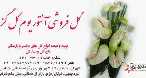 گل فروشی آنتوریوم گل گز در تهران