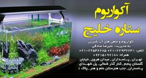 آکواریوم ستاره خلیج در تهران