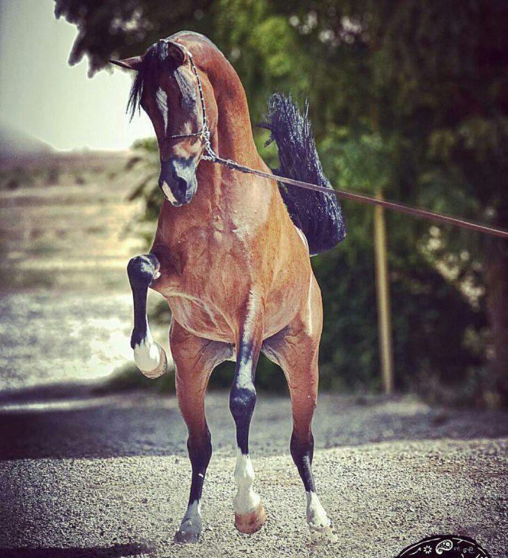 کمپ اسب سواری