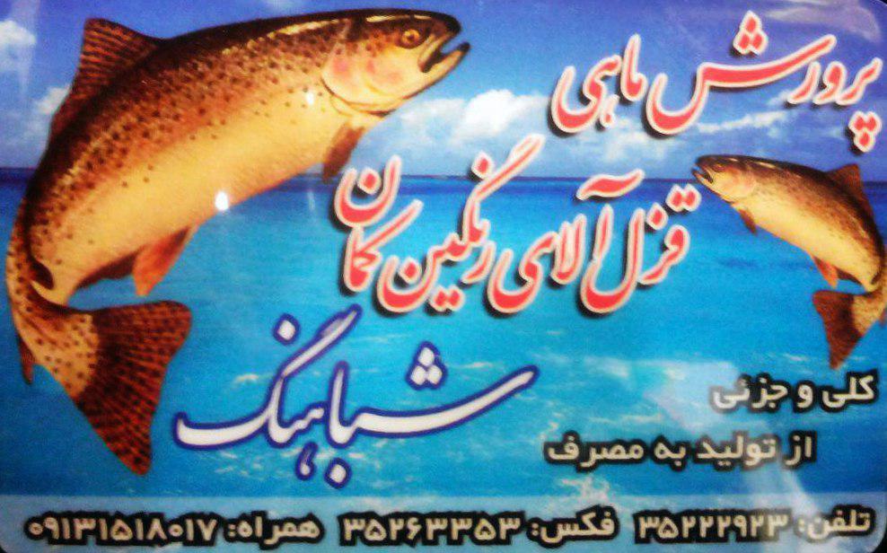 پرورش ماهی قزل آلا شباهنگ در یزد
