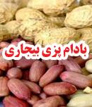 بادام پزی بیجاری در آستانه اشرفیه
