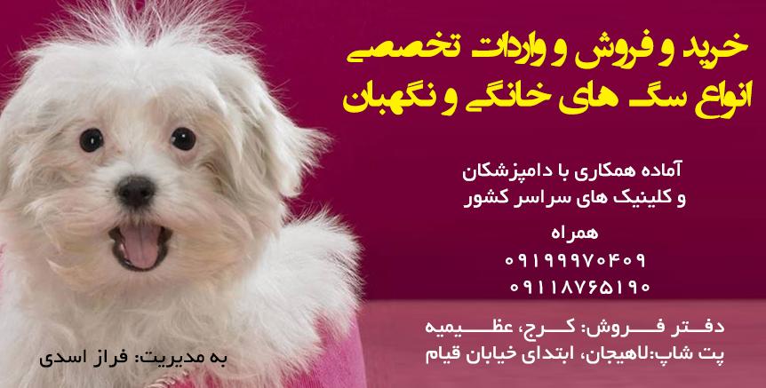 سگ فروشی در کرج