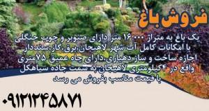فروش باغ 16000 متری در لاهیجان